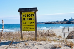 No Dogs Good Harbor Beach Gloucester Whitham Street Entrance copyright Kim Smith