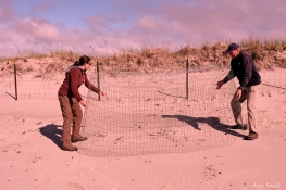 Essex Greenbelt install plover exclosure GHB Gloucester -9 copyright Kim Smith