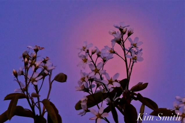 Full Flower Moon May Gloucester Massachusetts -2 copyright Kim Smith