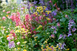 Urban Pollinator Garden Mary Prentiss Inn Cambridge copyright Kim Smith - 37