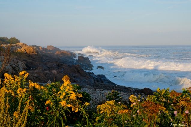 Hurricane Humberto Back Shore Seaside Goldenrod Gloucester Massachusetts copyright Kim Smith - 14