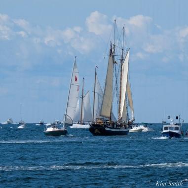 Schooner Festival Gloucester Parade of Sail copyright Kim Smith - 45 copy