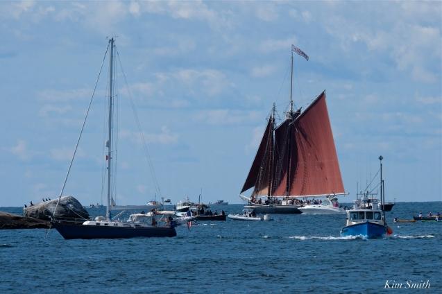 Schooner Festival Gloucester Parade of Sail copyright Kim Smith - 48 copy