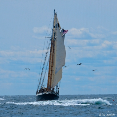 Schooner Festival Gloucester Parade of Sail copyright Kim Smith - 57 copy