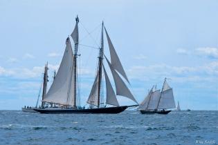 Schooner Festival Gloucester Parade of Sail copyright Kim Smith - 62 copy