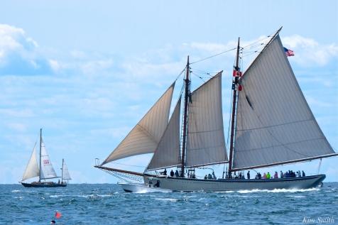 Schooner Festival Gloucester Parade of Sail copyright Kim Smith - 67 copy