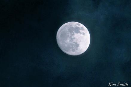 Blue Moon copyright Kim Smith