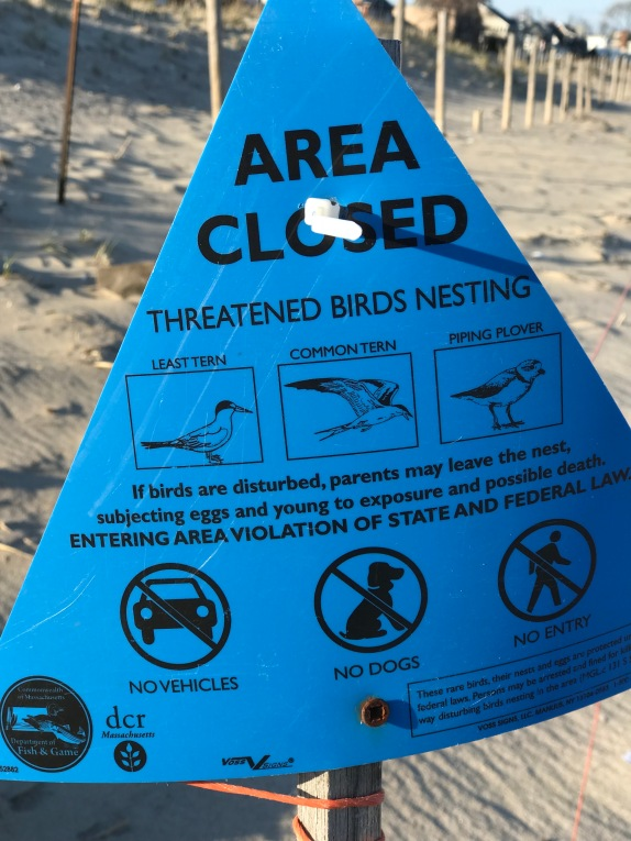 Piping Plovers s DCR protected species signs April 2020 copyright Kim Smith - 12 of 14