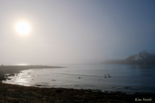 Brant Geese Eastern Point Gloucester Fog Lifting copyright Kim Smith - 14 of 23
