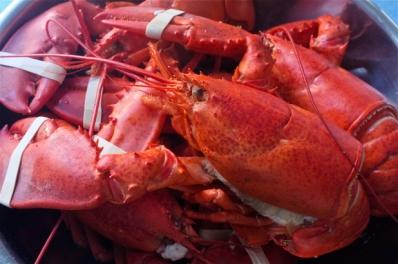 Lobsters copyright Kim Smith