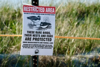 Rare birds nesting sign Good Harbor Beach copyright Kim Smithjpeg