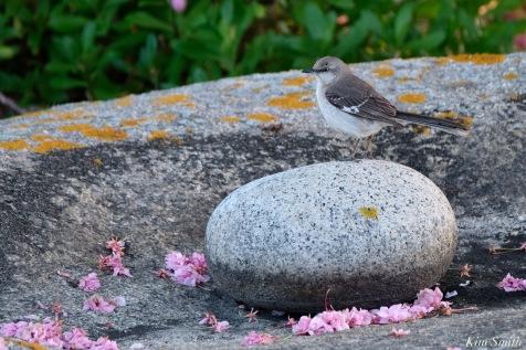 Mockingbird Spring 2020 copyright Kim Smith - 44 of 68
